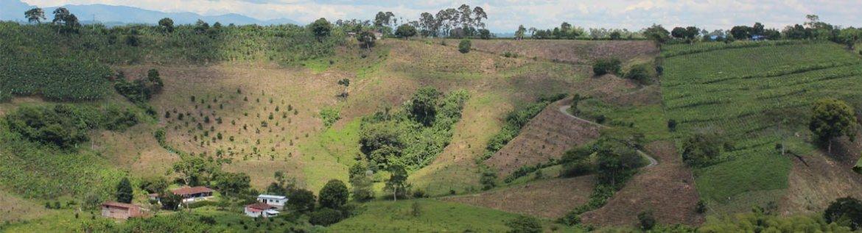 koffiedriehoek van Colombia