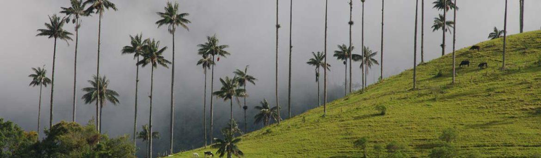 reisadvies-colombia